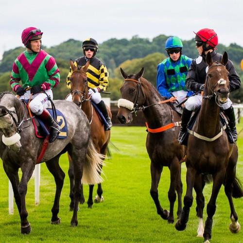 Race horses on track